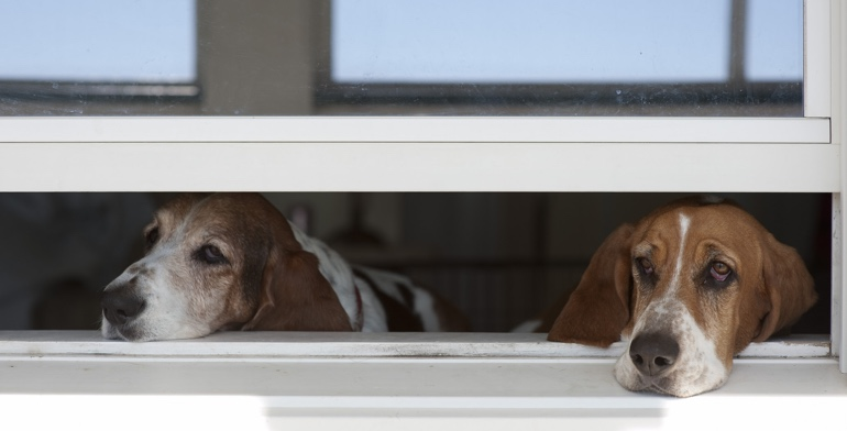 Dogs look out open window without window treatment in Colorado Springs.